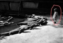 鳄鱼会咬人?你知道的太多了,小孩跑进数十只鳄鱼塘里