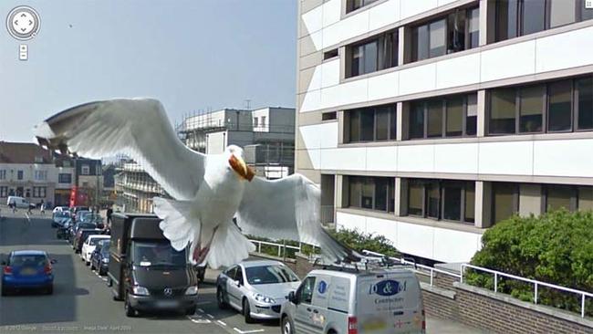 一些奇特谷歌地图相片 瞬间的定格