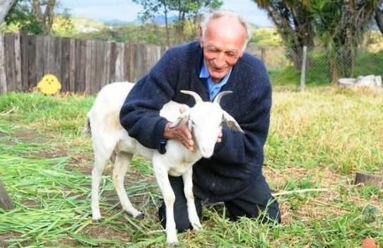 77岁老人和山羊结婚 优点多不会怀孕和唠叨 已育有6子女